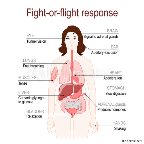 Anatomic diagram of the human body's fight or flight response